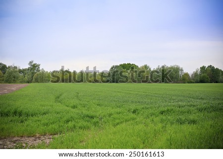 Wheat field in springtime - stock photo