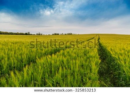 Wheat field landscape with path in summer-Hungary - stock photo