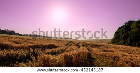 Wheat field on the background of the setting sun and a pink sky. majestic rural landscape.  Rich harvest Concept. creative image - stock photo