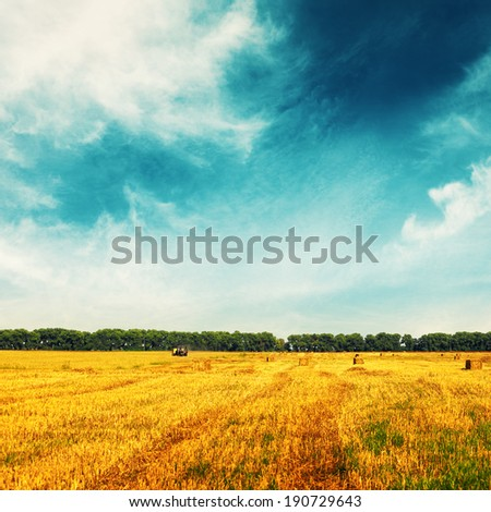 Wheat field with remote tractor and trees on horizon. Landscape in sunny day  - stock photo
