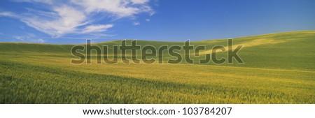 Wheat Fields, S.E. Washington - stock photo