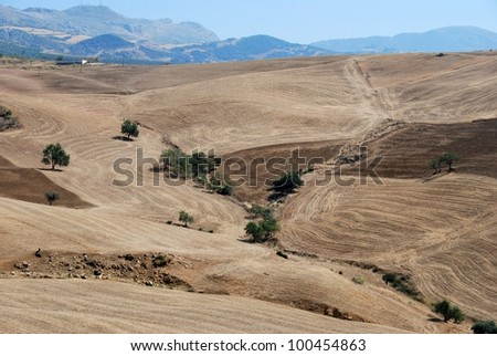 Wheat fields with mountains to the rear, Near Almogia, Costa del Sol, Malaga Province, Andalusia, Spain, Western Europe. - stock photo