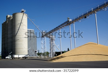 Wheat grain delivery to a collection and storage silo co-op in Washington State. - stock photo