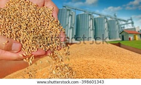 Wheat grain in a hand after good harvest of successful farmer, in a background agricultural silo - stock photo