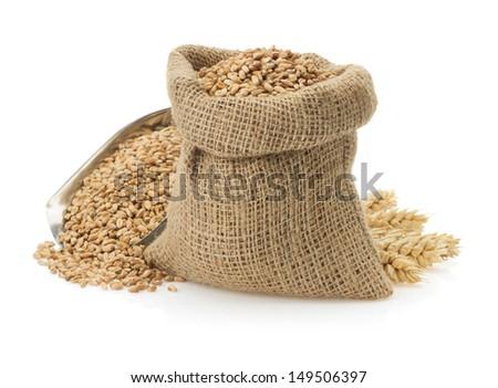wheat grain isolated on white background - stock photo