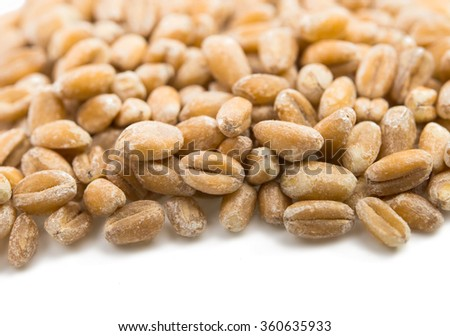 wheat grain on a white background - stock photo