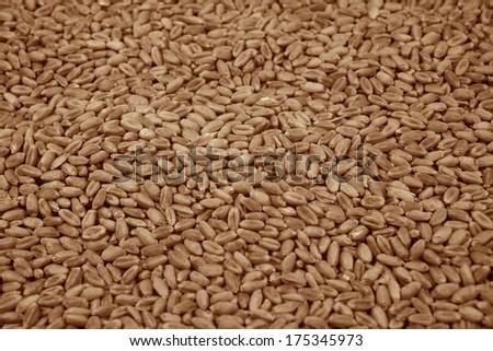 Wheat grains background - stock photo