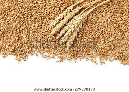 Wheat grains on a white background - stock photo