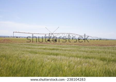 wheat green field landscape with irrigate wheels in Castilla Spain - stock photo