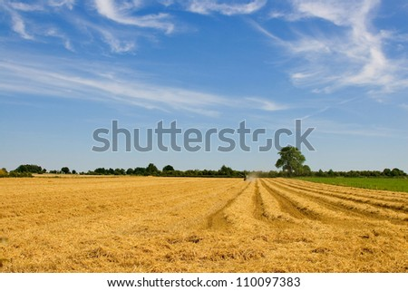 wheat harvest with combine harvester - stock photo