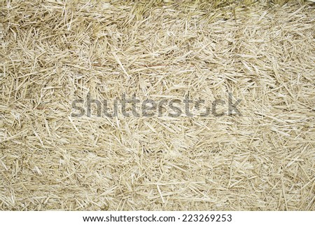 Wheat harvested in farm field, nature and grain - stock photo