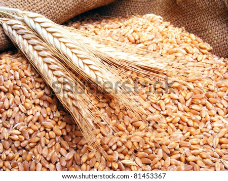 Wheat in burlap sack - stock photo