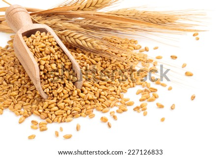 Wheat in scoop isolated on white background. - stock photo