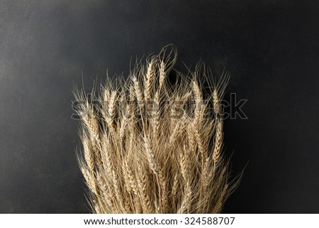 wheat on black background. top view - stock photo