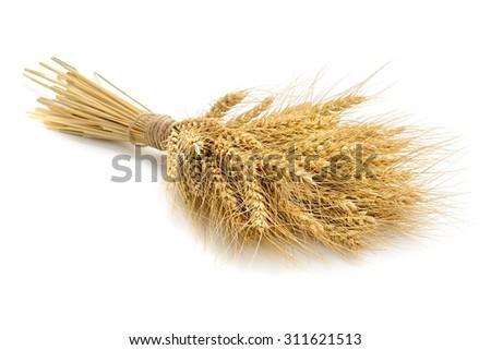 wheat on the white background.. - stock photo