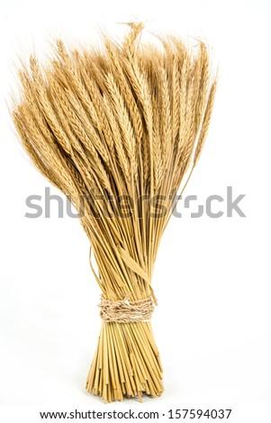 Wheat stem gold - stock photo