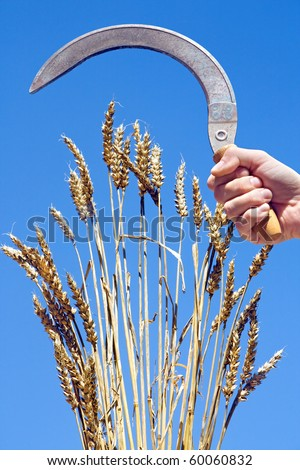 wheat with sickle - stock photo