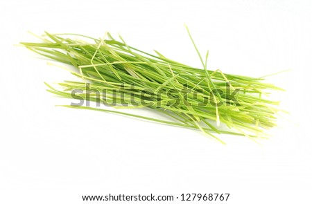 wheatgrass isolated on white background - stock photo