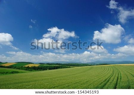 Wheel track in wheat field, north of Japan - stock photo