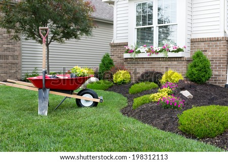 Wheelbarrow standing on a neat manicured green lawn alongside a flowerbed while planting a celosia flower garden around a house with fresh spring plants - stock photo
