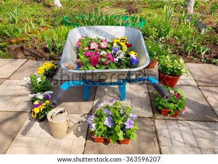 wheelbarrow with potted flowers and tools in the garden - stock photo