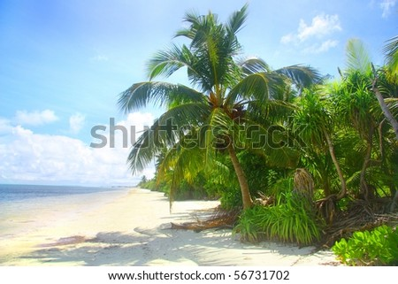 Where the Jungle Meets the Sea - stock photo