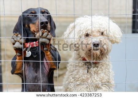 White and black dog behind girds - stock photo