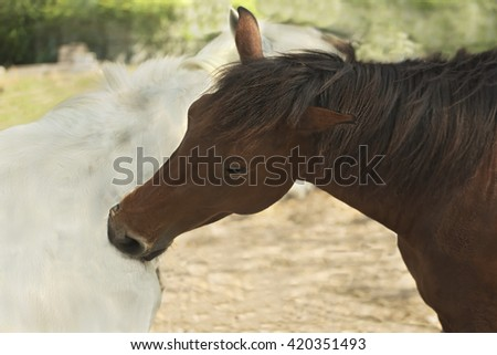 White and brown horse scratching each other by using their mouth - stock photo