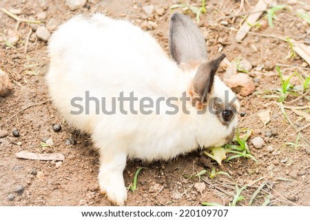 white and brown rabbit on the ground - stock photo