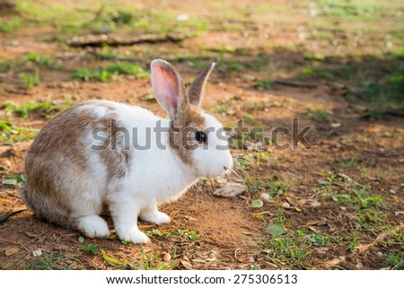 White and brown rabbit sitting and find the food - stock photo