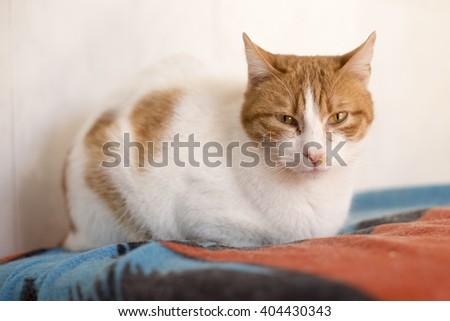 White and orange cat in shelter - stock photo