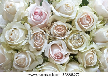 White and pastel vintage roses as a background - stock photo