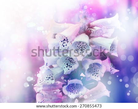 White and pink bell flowers, spring Convallaria majalis, or lily of the valley blooming, Bell-shaped foxgloves in summer bloom; this is a source of medicine known as Digoxin (British Formulary) - stock photo