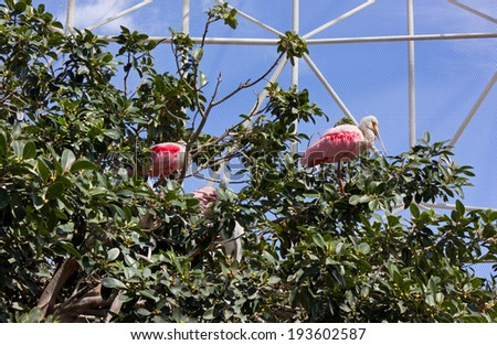 White and Pink Birds Resting Among the Trees in an Aviary - stock photo