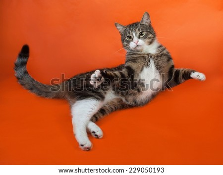 White and striped spotted cat plays on orange background - stock photo