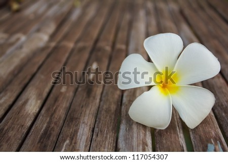 white and yellow frangipani flowers with wood in background. - stock photo