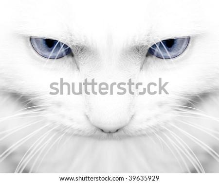 White angora cat - stock photo