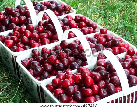White baskets filled with fresh sweet cherries - stock photo