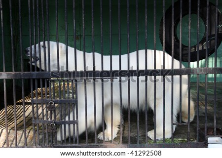 white bear closed in zoo cage - stock photo