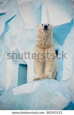 white bear stand on ice - stock photo