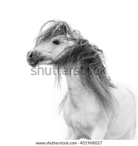 white beautiful andalusian horse with long mane portrait isolated on white - stock photo