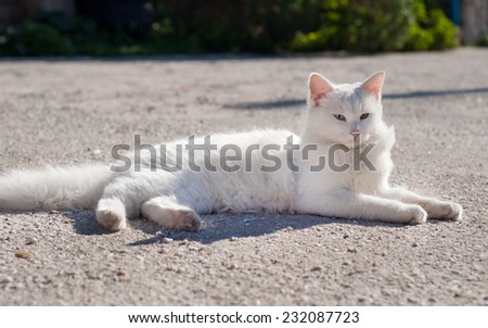 white beautiful cat lying in the sun in the courtyard - stock photo