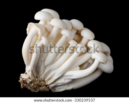 White beech mushrooms, bunapi shimeji, also called white clamshell mushrooms, an edible fungus on black background. Front view macro photo. - stock photo