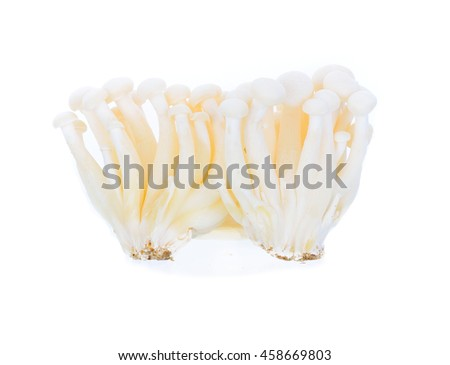 white  beech mushrooms, mushroom, Edible mushroom isolated on white background - stock photo