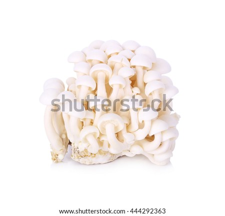White beech mushrooms, Shimeji mushroom, Edible mushroom - stock photo