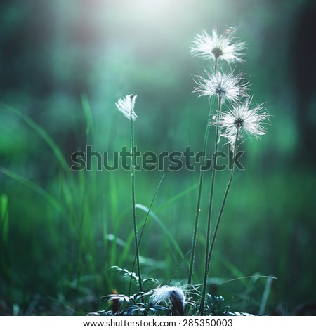 white big soft flowers in green grass in forest - stock photo