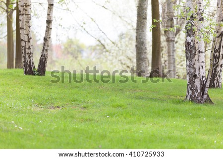 White Birch Meadow in a city park - stock photo