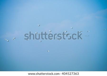 White Bird - stock photo