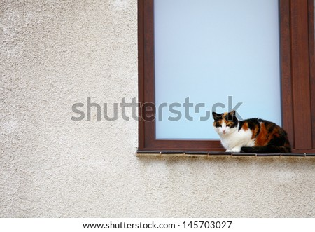 white black red cat on the window sill - stock photo