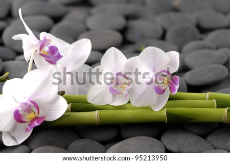 White branch orchid with thin bamboo grove on pebbles - stock photo